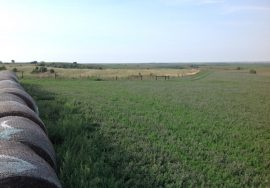307+/- Acres, dryland crop and pasture, Greeley County, Nebraska.
