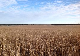 160 Acres, Pivot Irrigated, Wheeler County, NE – PENDING SOLD