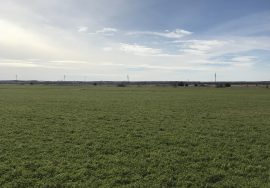 66.84+/- Acres, Pivot Irrigated, Sherman County, Nebraska